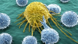 Lymphocytes attacking a cancer cell