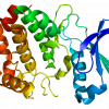 Crystal structure of Aurora Kinase A protein